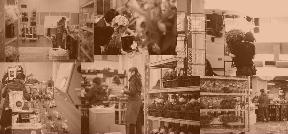 giraflower-ジラフラワー-