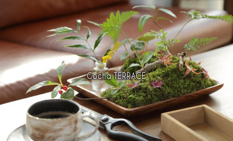 Cocha TERRACE(コチャテラス)
