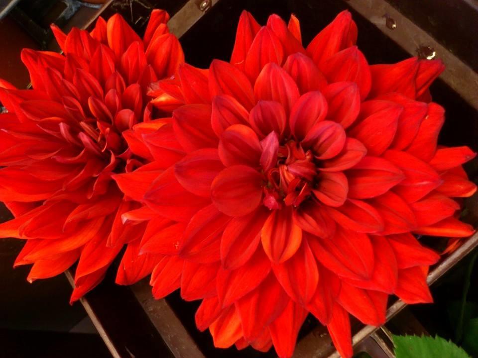 有限会社 花の藤商