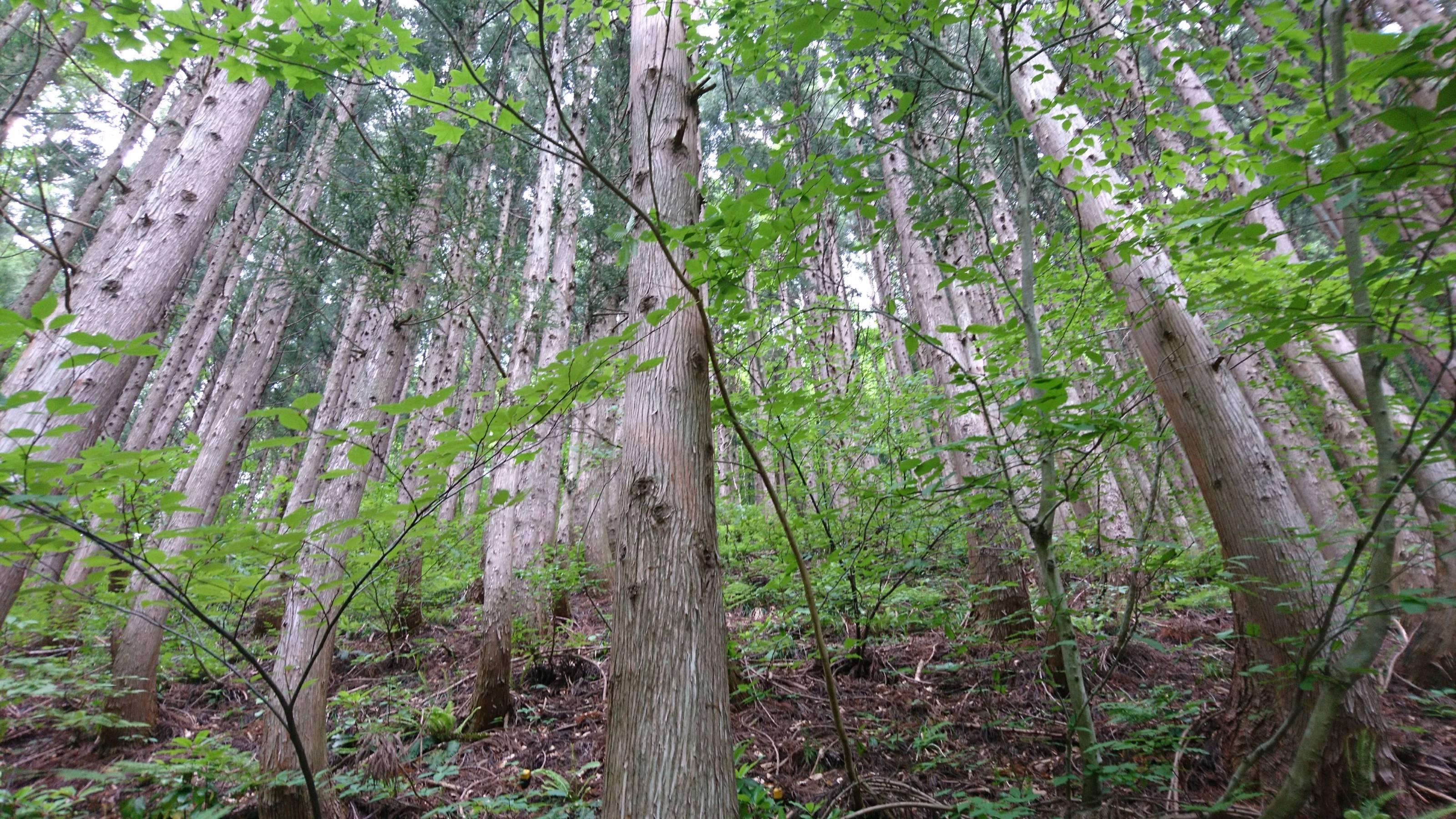 公益財団法人日本自然保護協会